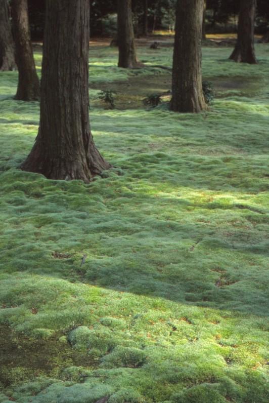 f:id:penpengrass:20200201231825j:image