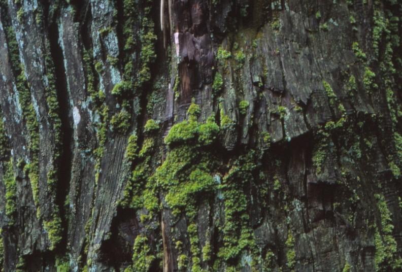 f:id:penpengrass:20200201233029j:image