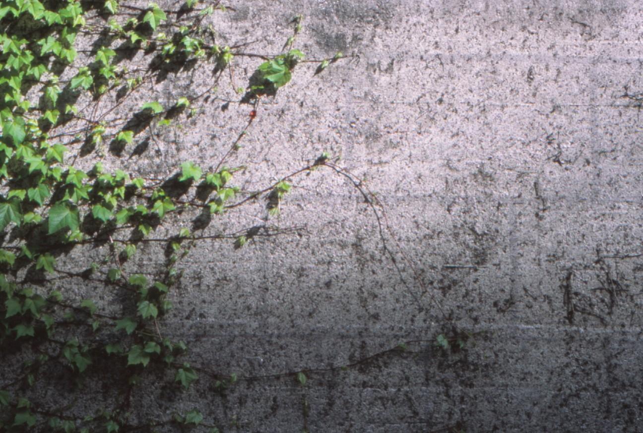 f:id:penpengrass:20200623121545j:image