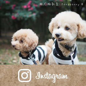 犬服教室 Peroberry Instagram