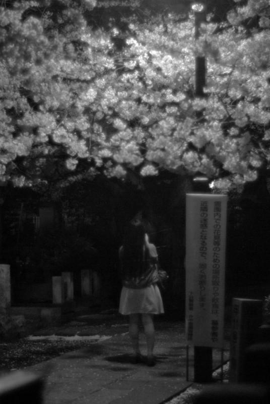 谷中霊園の夜桜
