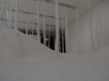 六本木 森美術館 ネイチャー・センス展