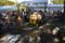 日比谷公園 土と平和の祭典