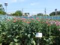 [公園]東大和市 東京都薬用植物園