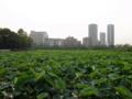 [散策]上野公園 不忍池