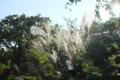 [公園]東向島 向島百花園
