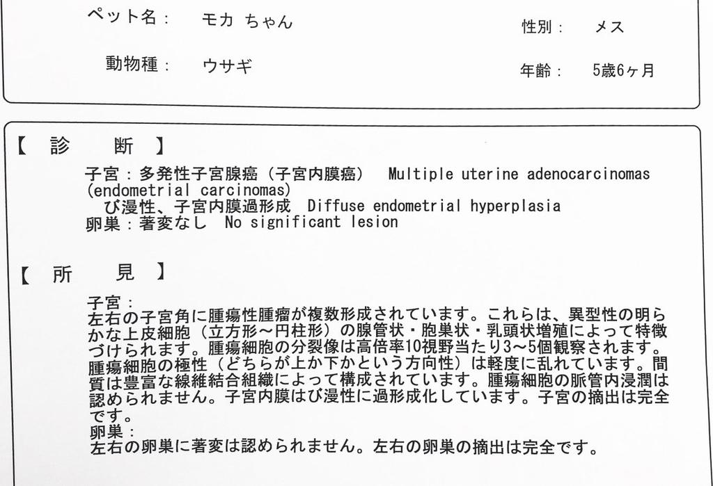 f:id:pg_yuki:20181031110856j:plain