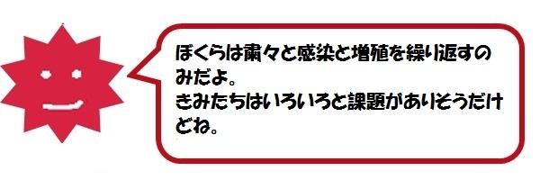 f:id:ph_minimal:20210202230322j:plain