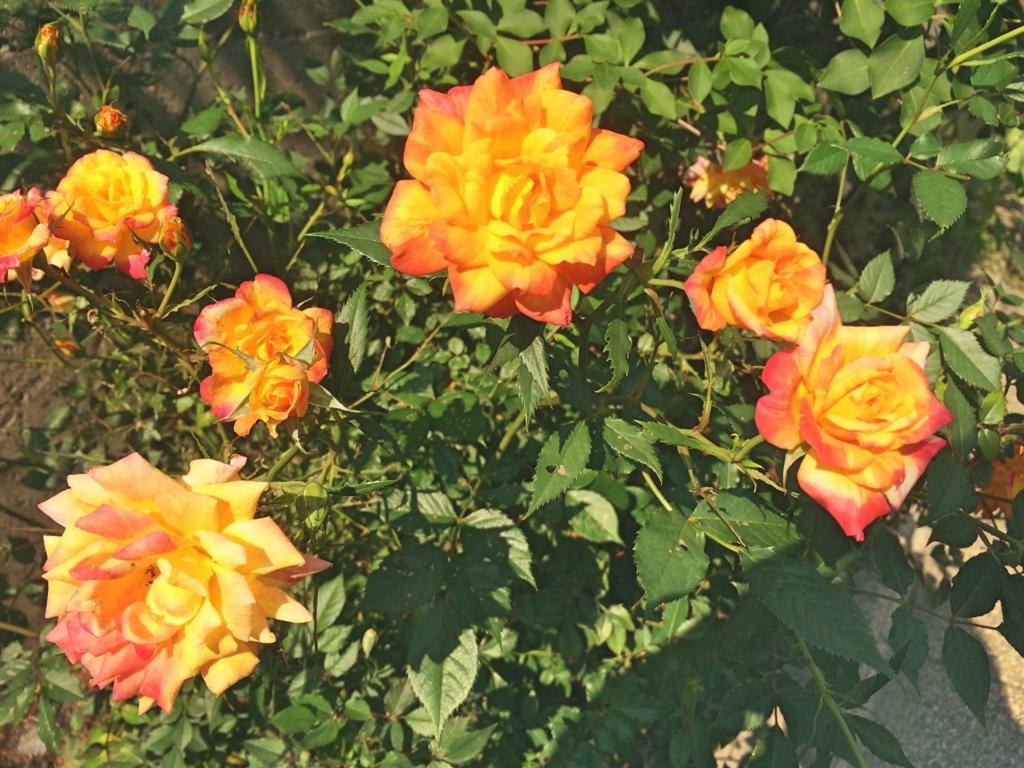 置かれた場所で咲きなさい 渡辺和子さん フッサール メルロ・ポンティ 存在 贈与 マルティン・ハイデッガー