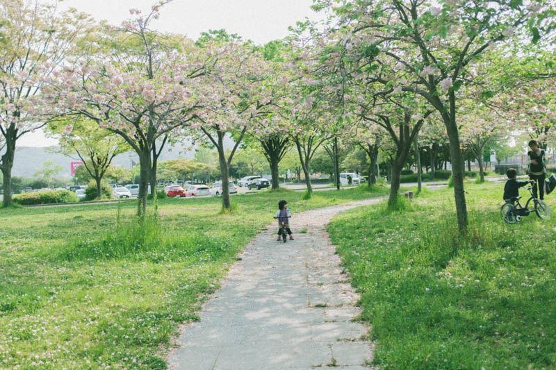 f:id:photo-no-wa:20200509160340j:plain