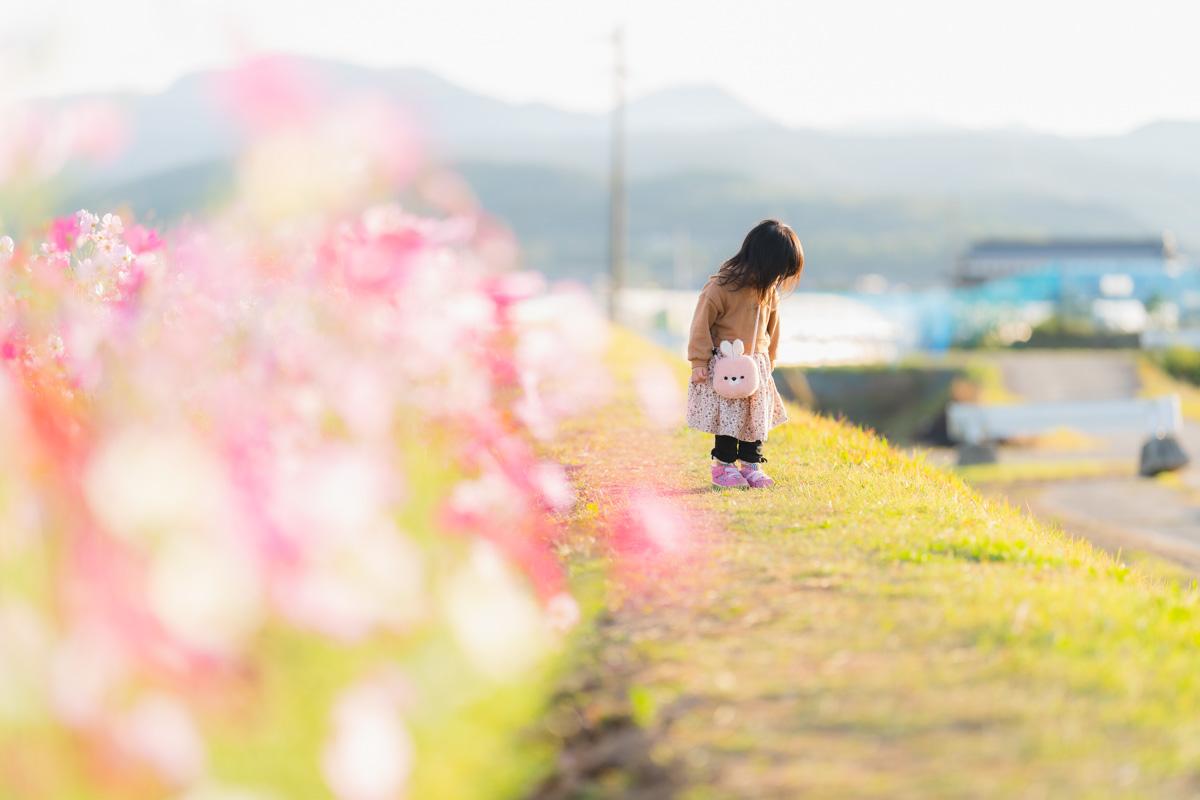f:id:photo-no-wa:20201020230303j:plain