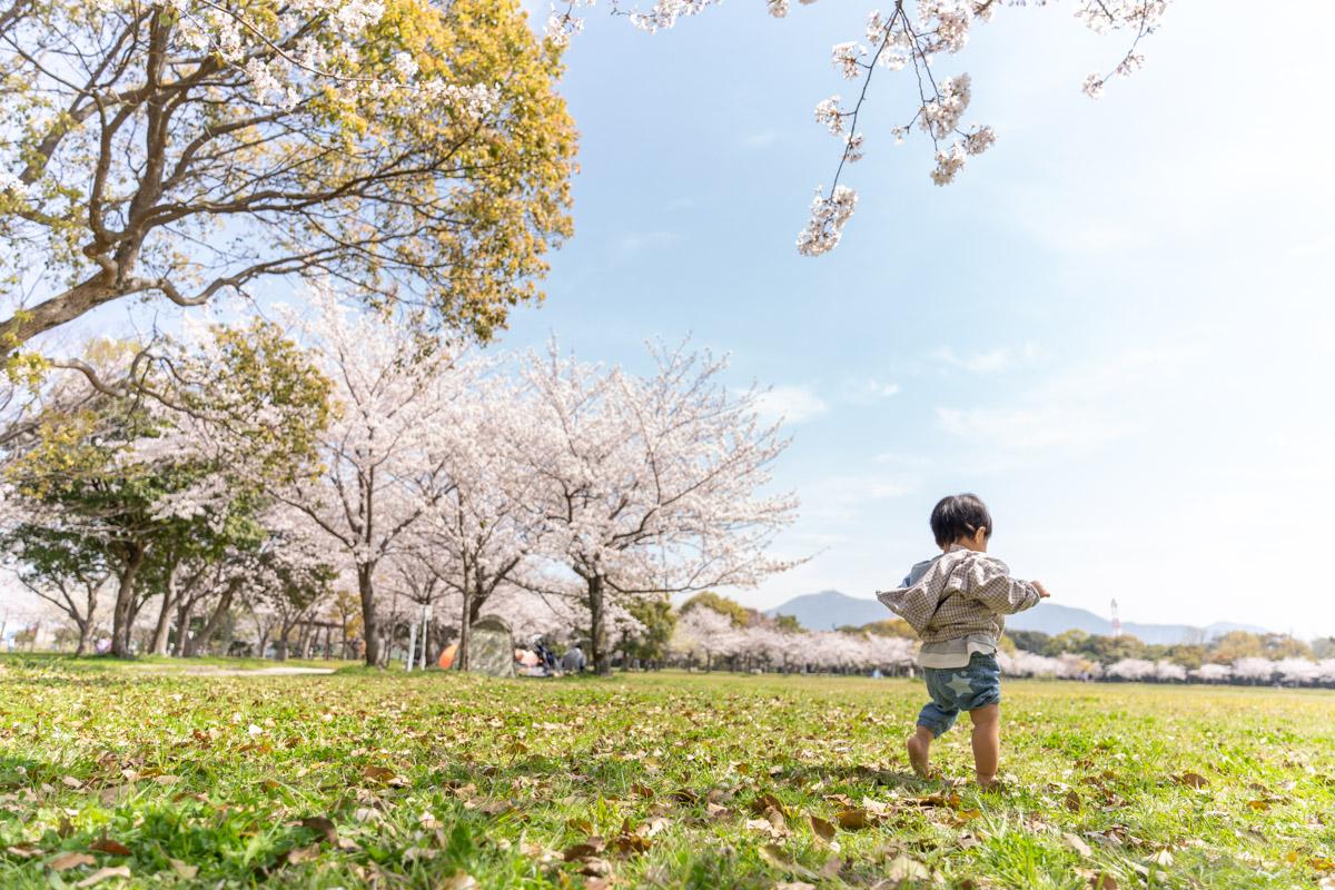 f:id:photo-no-wa:20210328131808j:plain