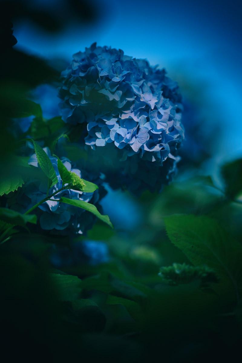 f:id:photo-no-wa:20210619153613j:plain