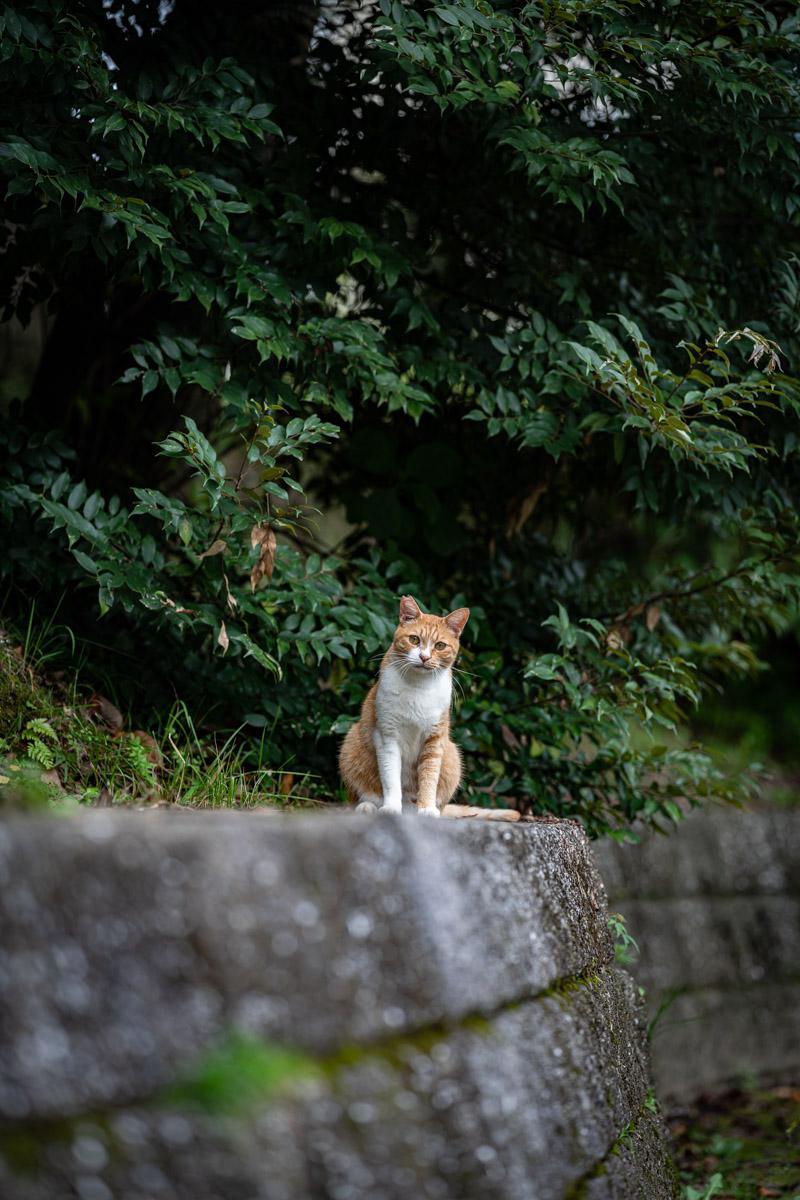 f:id:photo-no-wa:20210912212703j:plain