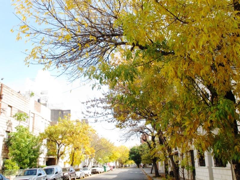 Rosario_tree