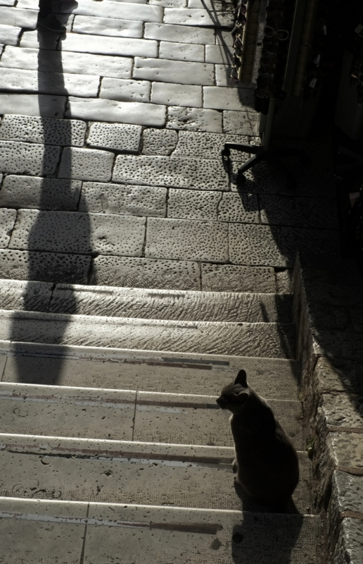 Split_cat_shadow