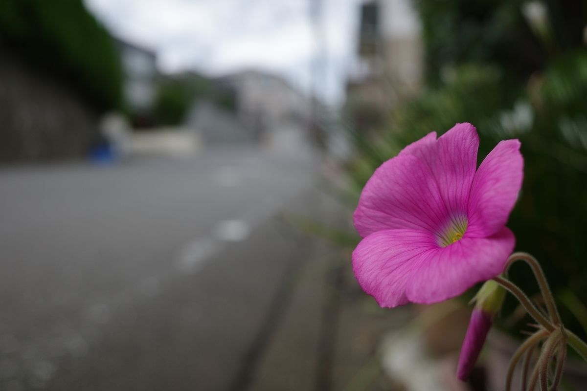 f:id:photo_sanpo:20201018125728j:plain