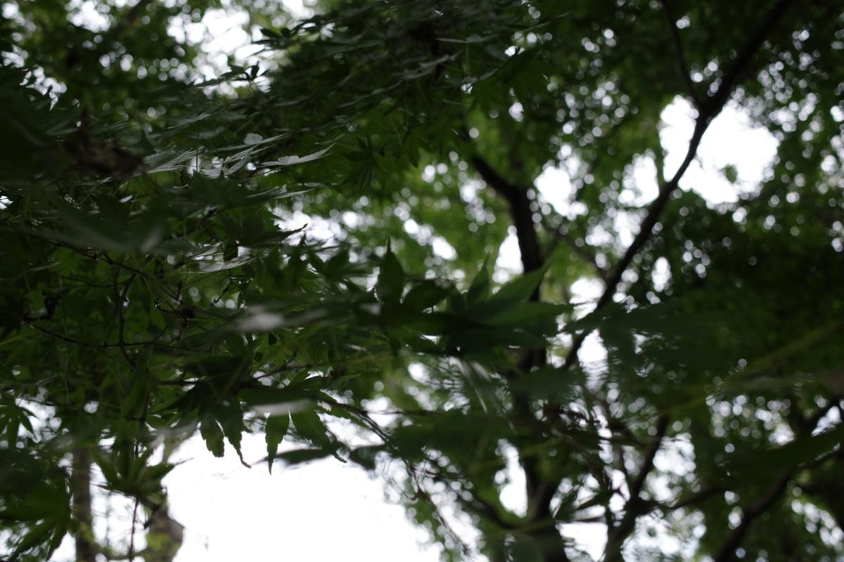 f:id:photo_sanpo:20201018125844j:plain