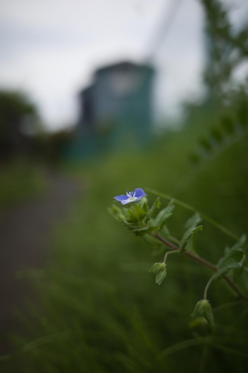 f:id:photo_sanpo:20210501123504j:plain