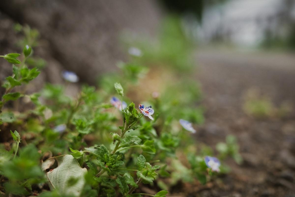 f:id:photo_sanpo:20210501123526j:plain