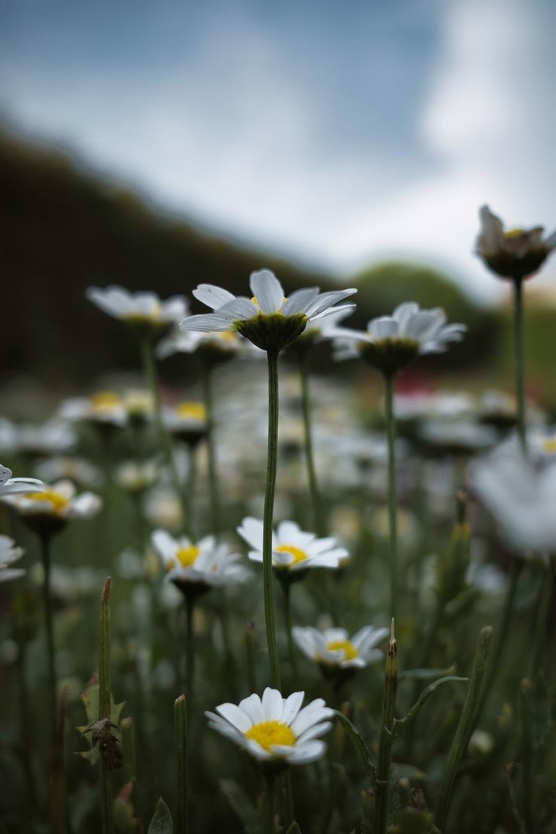 f:id:photo_sanpo:20210604224050j:plain