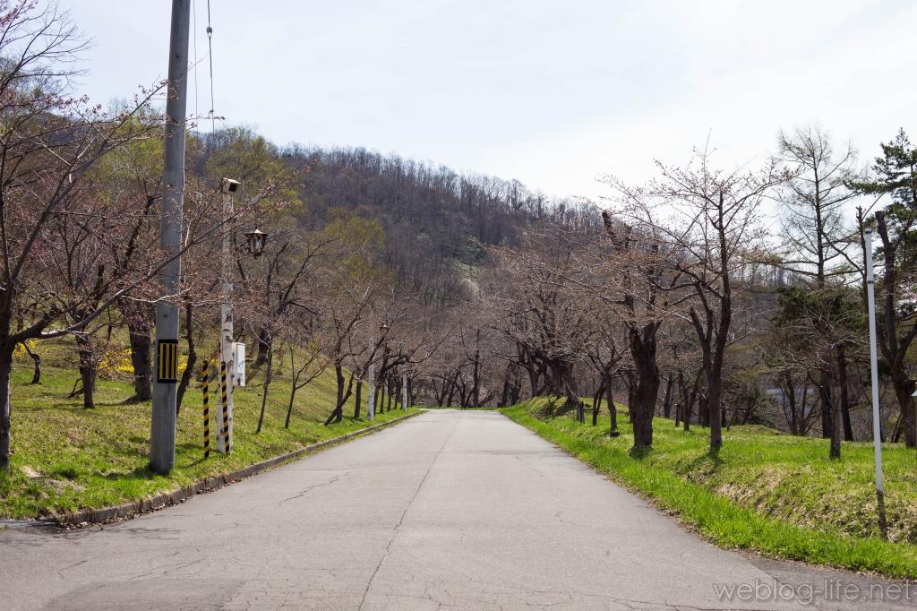 美唄 東明公園の並木道