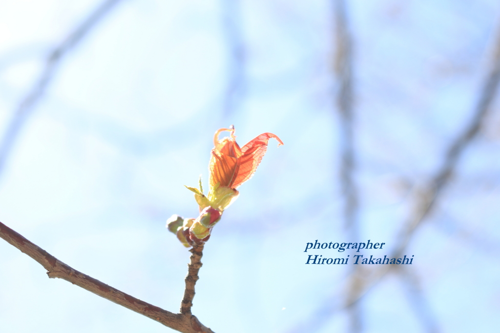 f:id:photographer_Hiromi:20170504093339j:plain