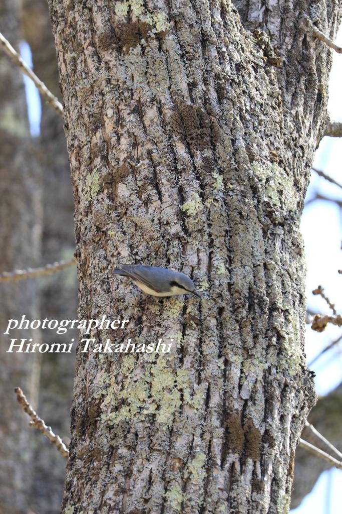 f:id:photographer_Hiromi:20170504093714j:plain