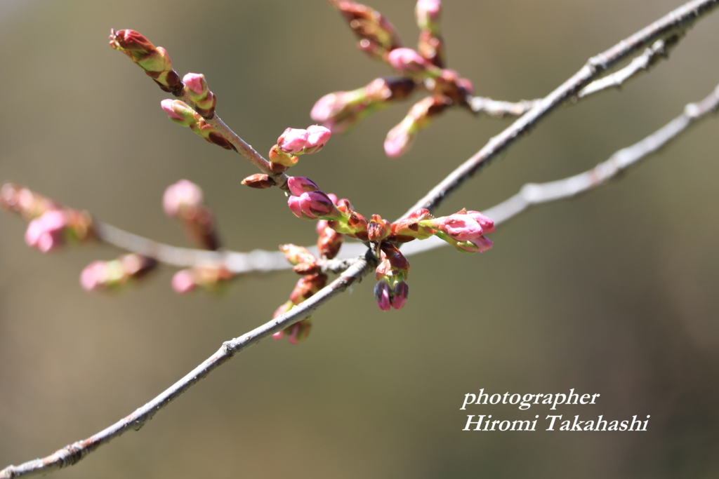 f:id:photographer_Hiromi:20170504093942j:plain