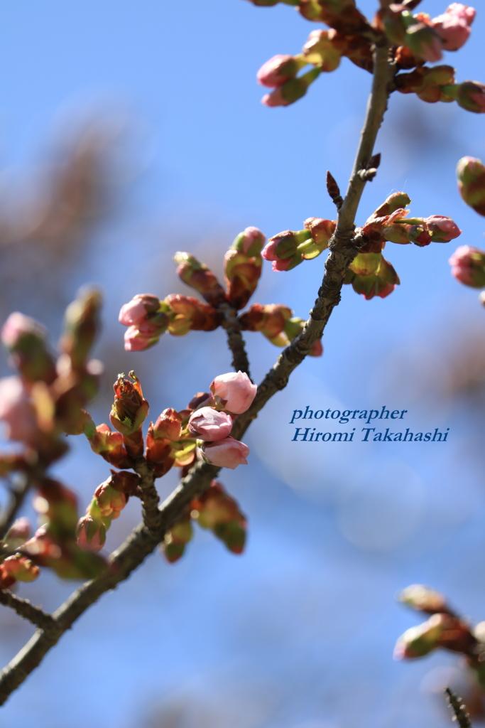 f:id:photographer_Hiromi:20170504094344j:plain