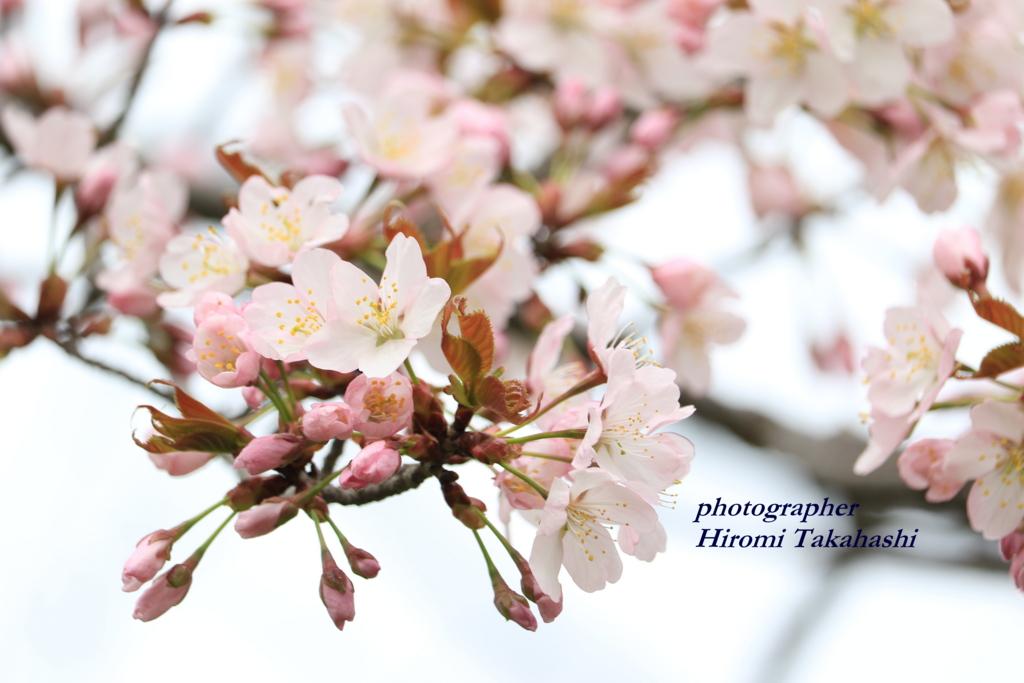 f:id:photographer_Hiromi:20170505220407j:plain