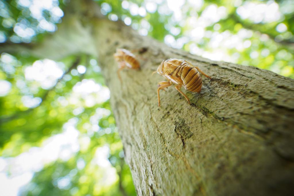 f:id:photographerti:オリンパス7-14mmPROの広角マクロ撮影
