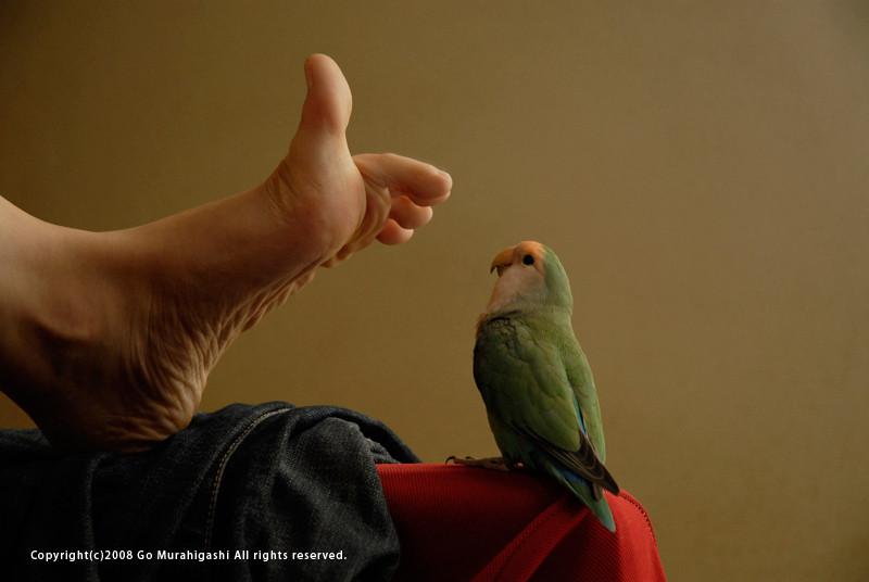 f:id:photosgo:20080919182642j:image:W400