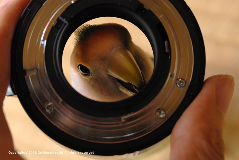 f:id:photosgo:20081101235933j:image:w400