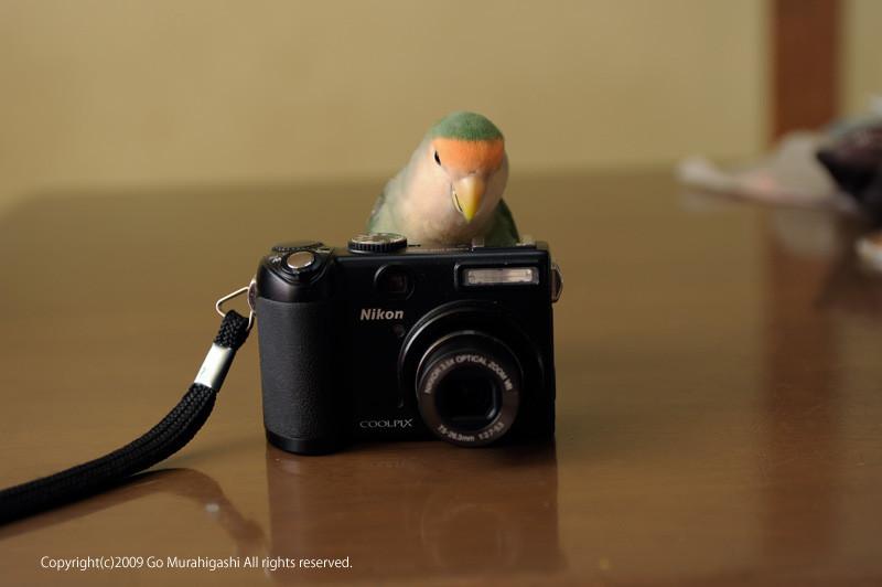 f:id:photosgo:20090227235715j:image:w400