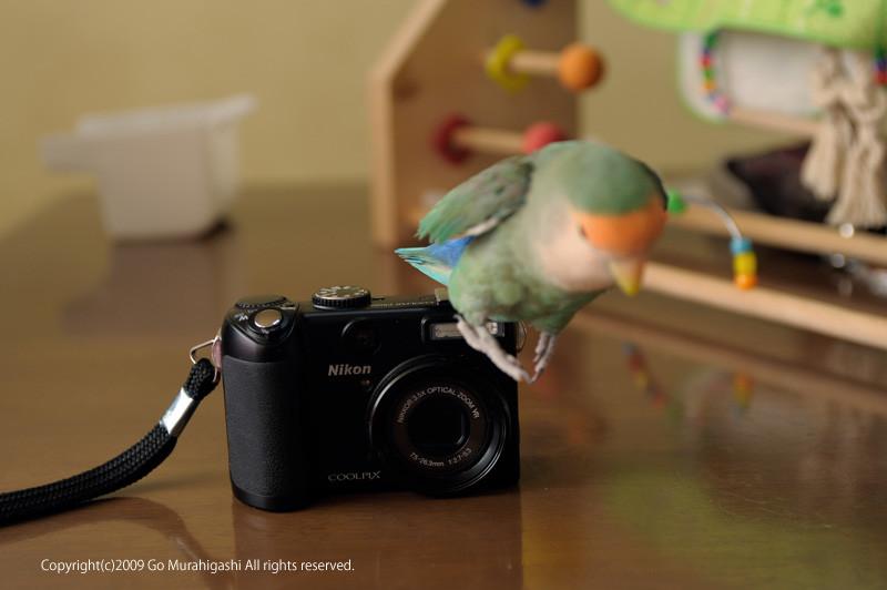 f:id:photosgo:20090227235716j:image:w400