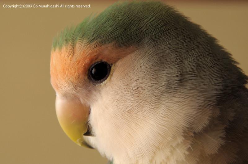 f:id:photosgo:20090314003713j:image:W400