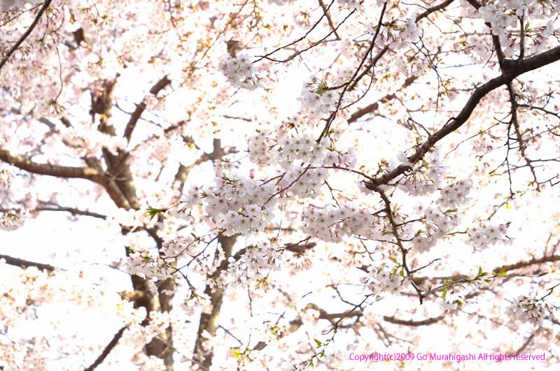 f:id:photosgo:20090406171619j:image:w400