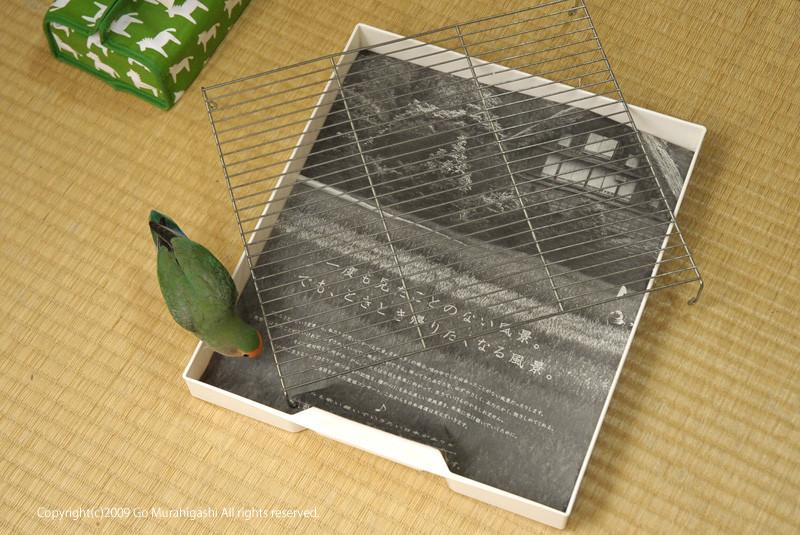 f:id:photosgo:20090515000925j:image:W400
