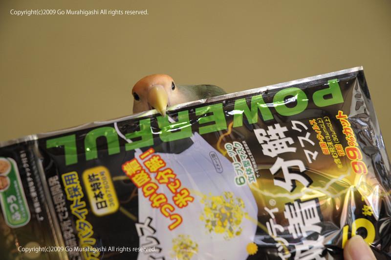 f:id:photosgo:20090530235411j:image:w420