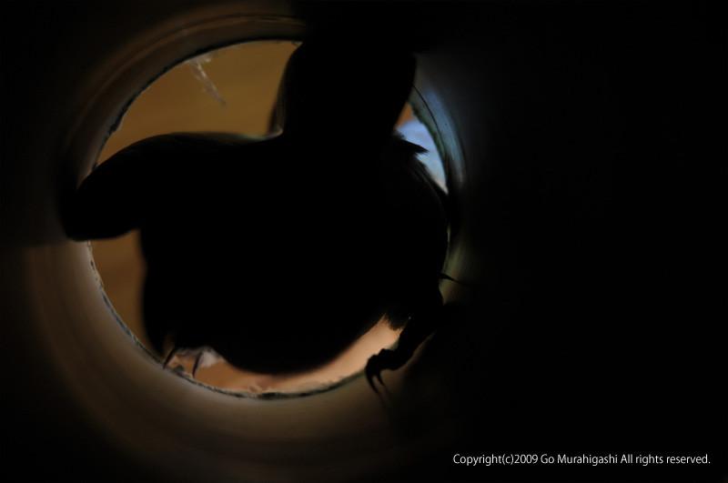 f:id:photosgo:20090615234955j:image:W410
