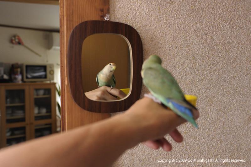 f:id:photosgo:20090617234449j:image:w420