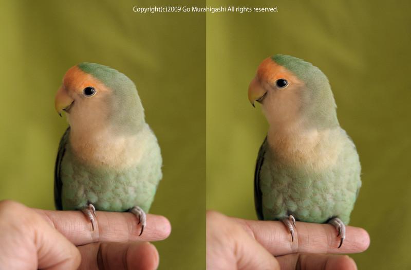 f:id:photosgo:20090704094151j:image:w420