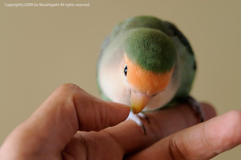f:id:photosgo:20090805231800j:image:w450