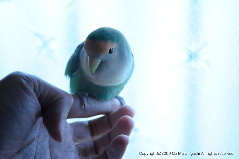 f:id:photosgo:20091203235727j:image:w450