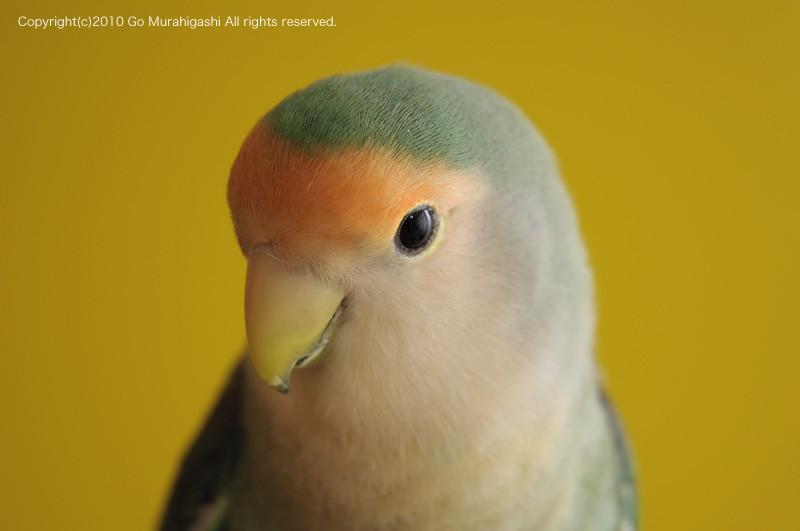f:id:photosgo:20091231194504j:image:w450
