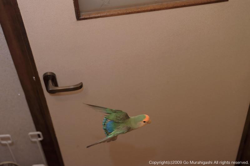 f:id:photosgo:20100121222443j:image:W450