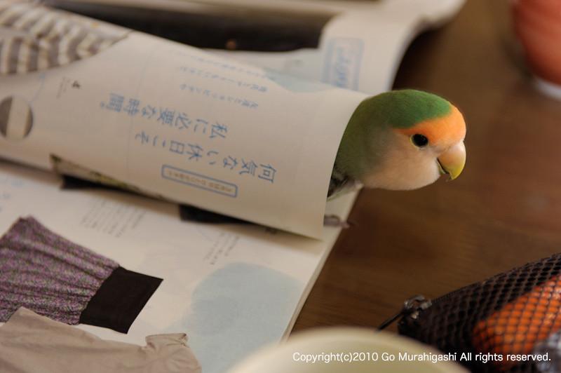 f:id:photosgo:20100216231039j:image:w450