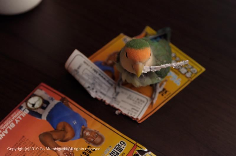 f:id:photosgo:20100610141200j:image:W450