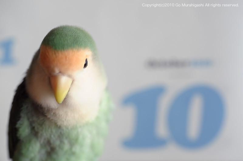 f:id:photosgo:20101027121838j:image:w450